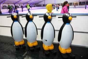 י-ם: חגיגה על הקרח