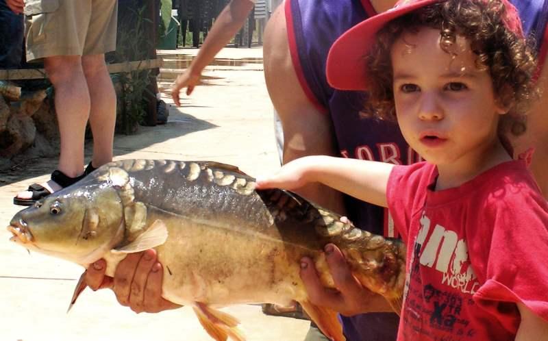 פסטיבל הקרפיון בפארק הדיג מעיין צבי|צילום: עופר שנער