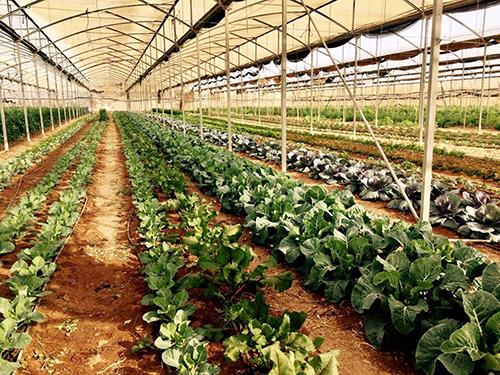חוות-בין-השיטין|צילום באדיבות חוות בית השיטין